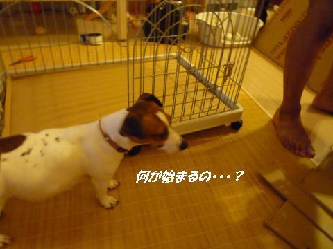 P1080091_convert_20100725125050.jpg