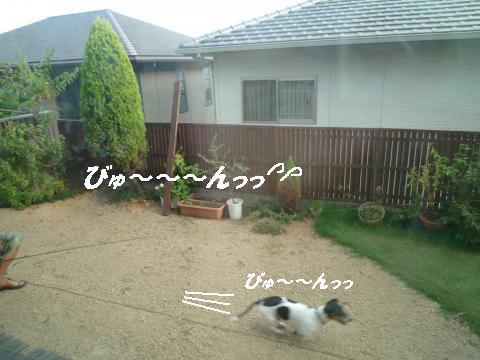 P1080822_convert_20100829180505.jpg