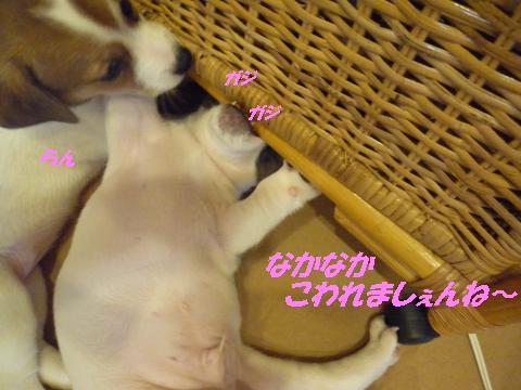 P1090074_convert_20100915005448.jpg