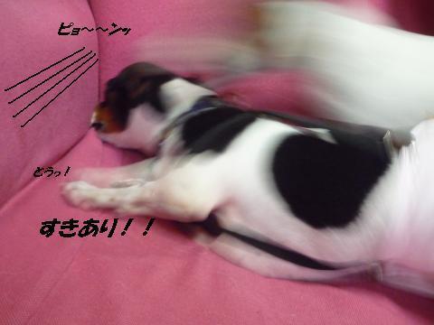 snap_mireiushiwakamairo_201015225532.jpg