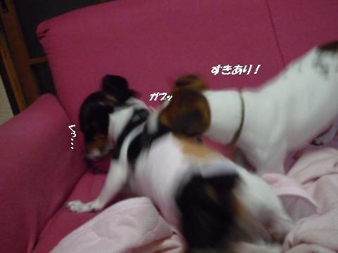 snap_mireiushiwakamairo_201015225746.jpg
