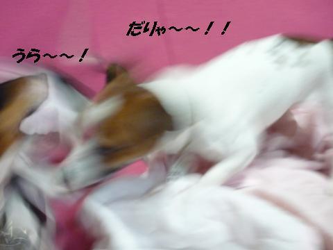 snap_mireiushiwakamairo_201015225935.jpg