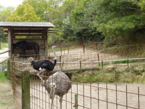 渋川動物公園20