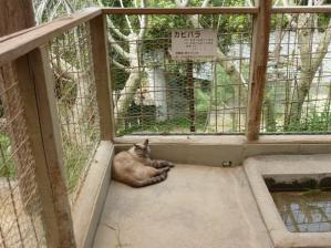渋川動物公園39