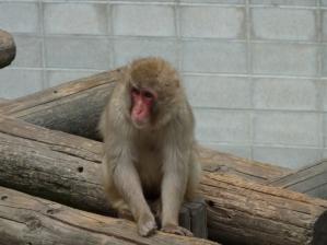 渋川動物公園36