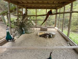 渋川動物公園11
