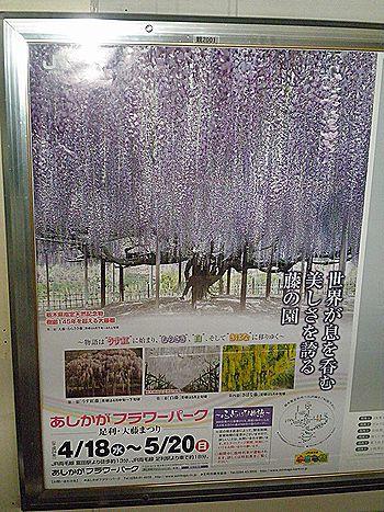 2012年「足利大藤まつり」ポスター