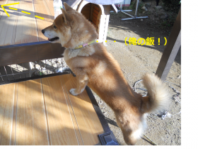 菫コ縺ョ鬟ッ_convert_20111213224616