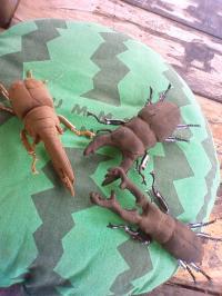 昆虫とスイカ