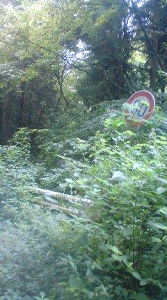 藪の中の標識