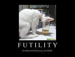 FUTILITY CAT