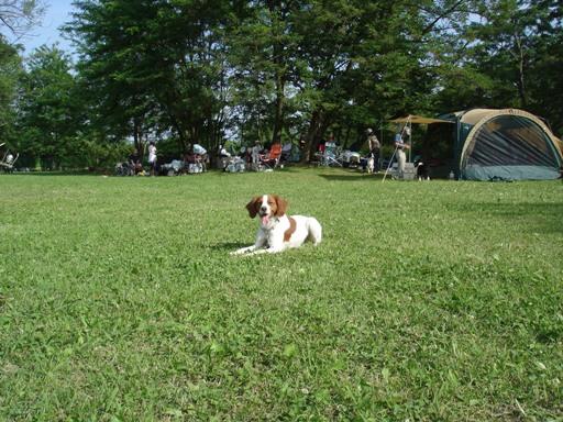 公園アジ20100602 004