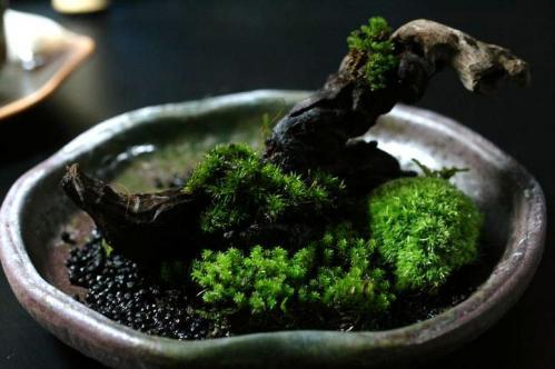 苔盆景のつもり②