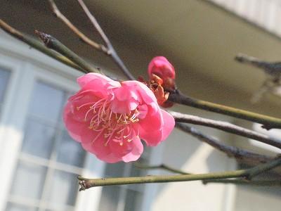 花・植物 924