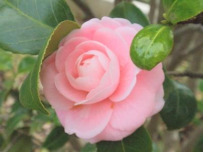 花・植物 938