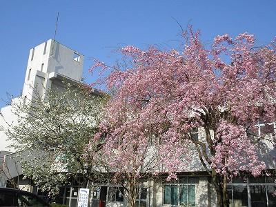 2010.04.08入学式 012