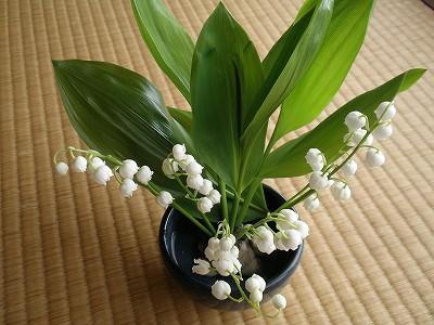 花・植物 977