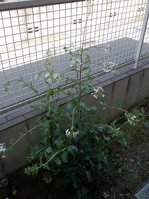 花・植物 981