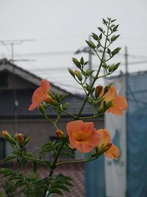 花・植物 1003