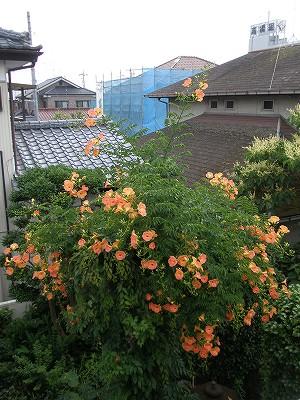 花・植物 1002