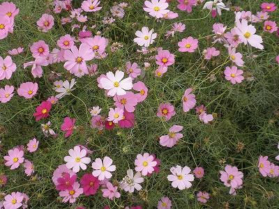 花・植物 1031