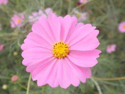 花・植物 1030