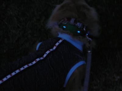 11/18/2009