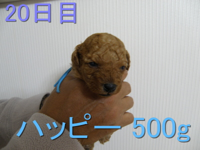 P5030031.jpg