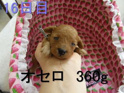 P5050007.jpg