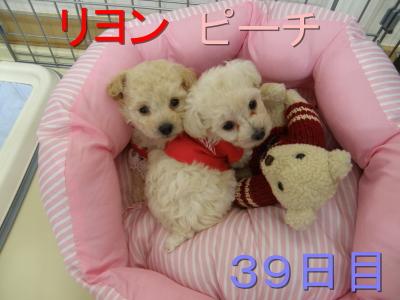 P5300019.jpg