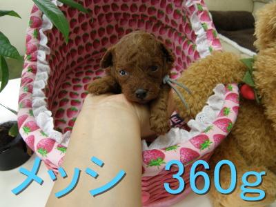 P6300047.jpg