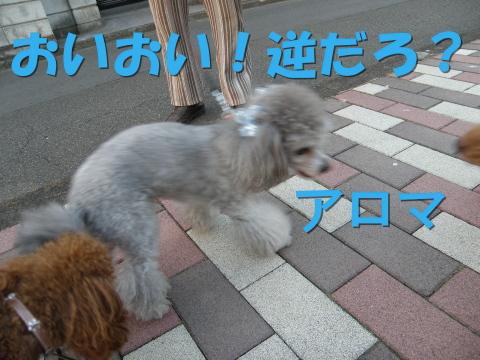 P8300021.jpg