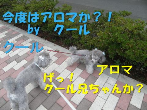 P9130047.jpg