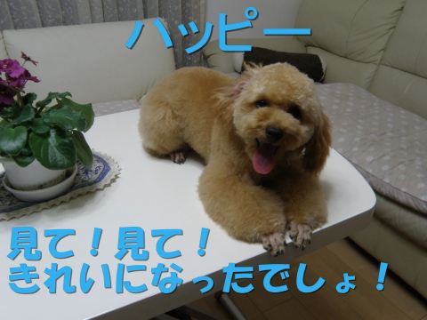 P9220018_01.jpg