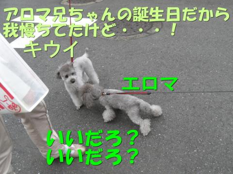 PA170061.jpg
