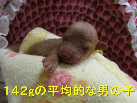 PA200028.jpg