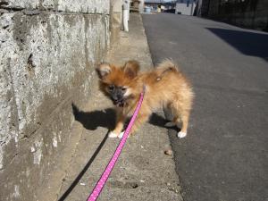 2007年2月16日、初めてのお散歩