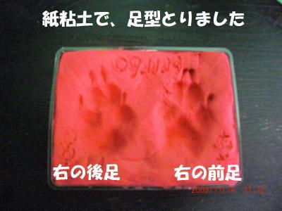 025+-+繧ウ繝斐・_convert_20091118095413
