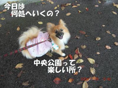 011-繧ウ繝。繝ウ繝・convert_20091201081601