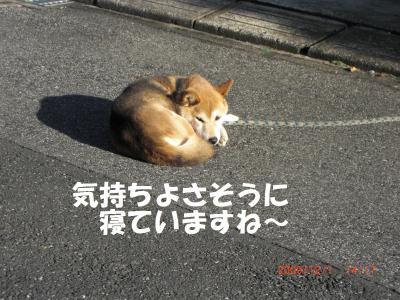 015繝シ繧ウ繝。繝ウ繝・convert_20091203094259