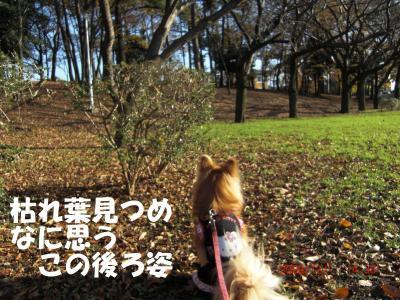 017繝シ繧ウ繝。繝ウ繝・convert_20091203094334