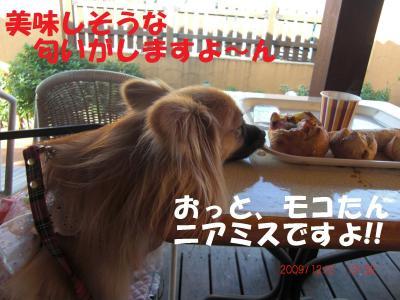 033繝シ繧ウ繝。繝ウ繝・convert_20091203094449