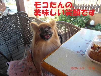 038繝シ繧ウ繝。繝ウ繝・convert_20091203094646