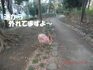 036-ちゃんと道を歩きましょう