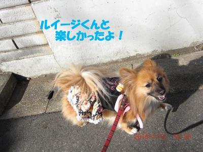 012繝シ繧ウ繝。繝ウ繝・convert_20100118220941