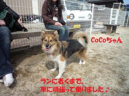 312CoCoちゃん