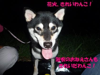 0731きれいわんこ