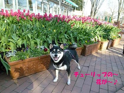 0109咲いた桃色
