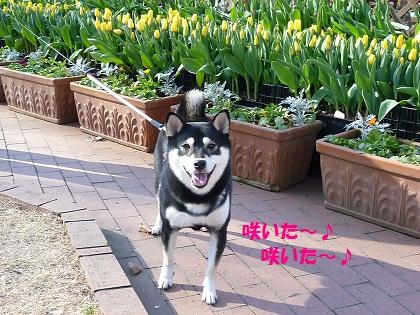 0109咲いた黄色