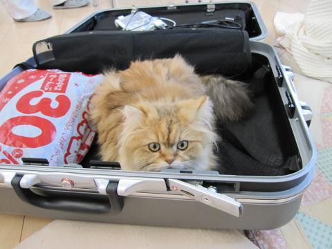 20110122001居座るネコ